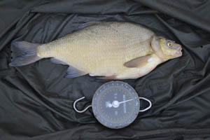 10lb 10oz bream